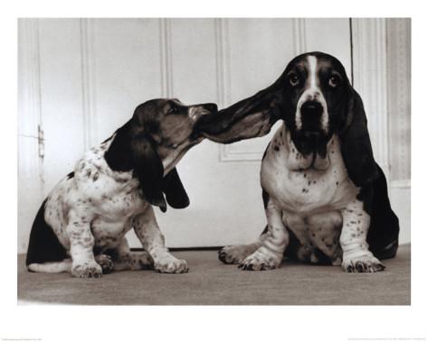 lend-me-your-ear